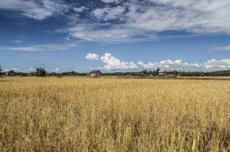 Immense rizière en pays Kachak - Cambodge -