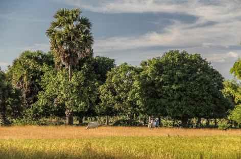 Sur l'île de Koh Trong - Cambodge -