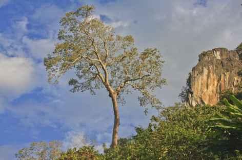 Paysage sur les rives de la Nam Ou - Laos -