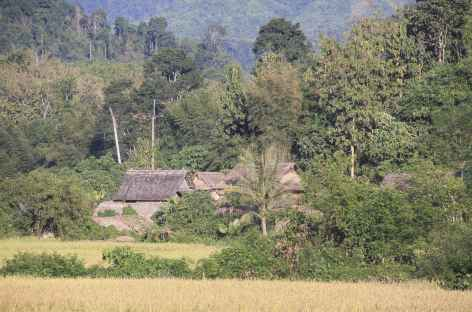 Paysage de rizières entre Luang Nam Tha et Muang Khua - Laos -