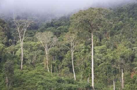 Brume matinale dans les parages de Ban Nam Lo - Laos -