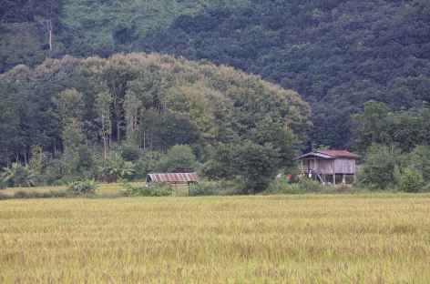 Rizières et forêt - Laos -