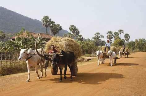 Chars à boeufs cambodgiens -