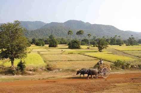 La campagne cambodgienne -