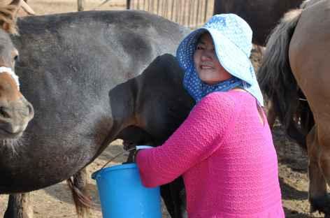 Traite du matin - Mongolie -