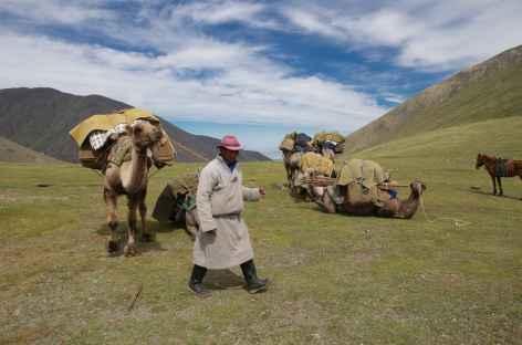 Chamelier - Mongolie -