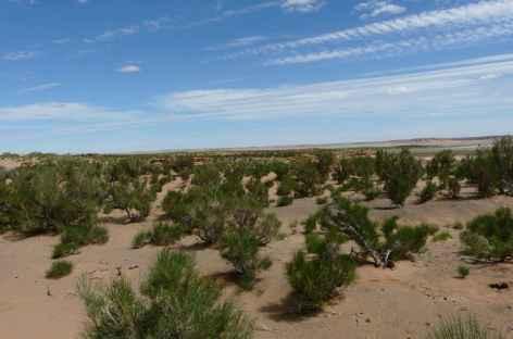 Forêts de Saxaoul - Mongolie -