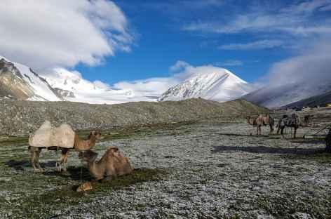 Camp des chameaux - Mongolie -