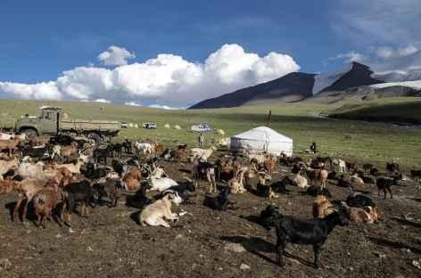 Troupeaux de chèvres - Mongolie -