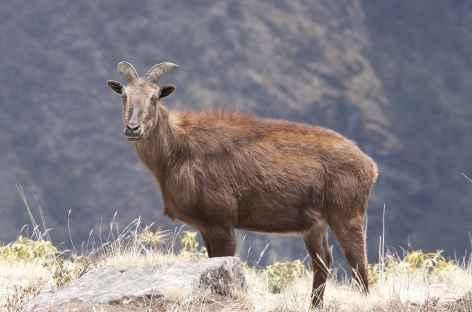 Thar - Nepal -