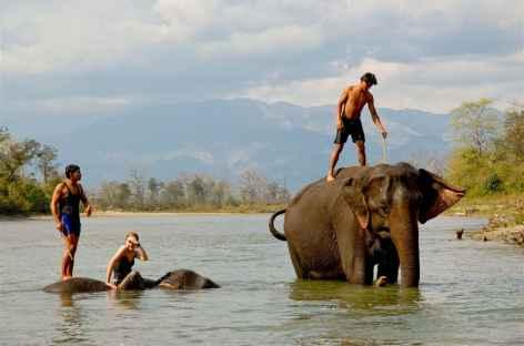 Bains des Eléphants, Chitwan - Népal -