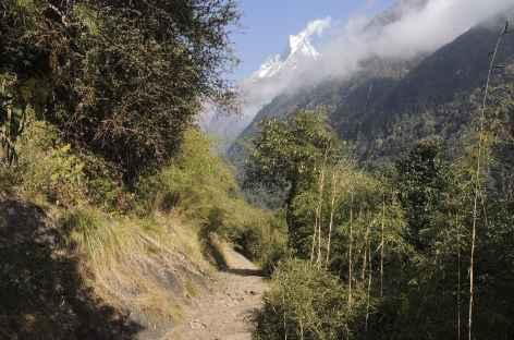 Sentier vers Bamboo - Népal -