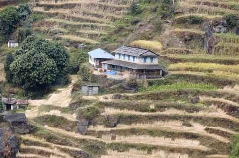 Hameaux et rizières entre Chomrong et Tadapani - Népal -