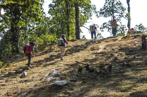 Sentier sur les crêtes vers Deorali - Népal -