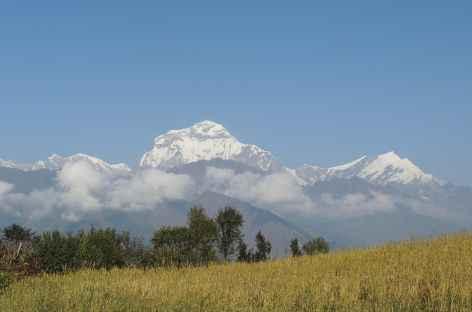 Dhaulagiri depuis les champs sous Gorepani - Népal -