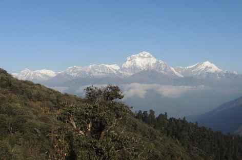 Dhaulagiri en descendant de Poon Hill - Népal -
