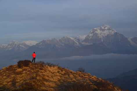 Dhaulagiri (8167 m) depuis Muldai - Népal -