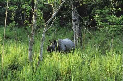 Rhino unicorne, Parc National du Chitwan, Térai - Népal -