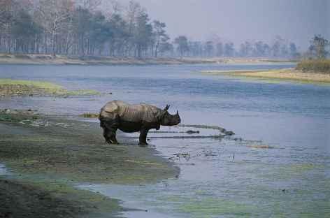 Rhino unicorne, Parc National du Chitwan, Terai - Népal -