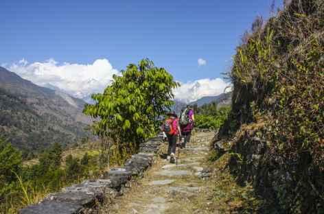 Balade vers Landrung, Népal -