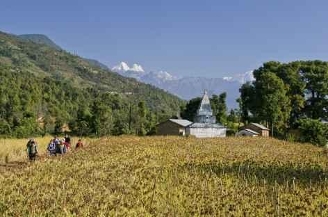 Trek dans les cultures, au loin le Ganesh Himal (Népal) -