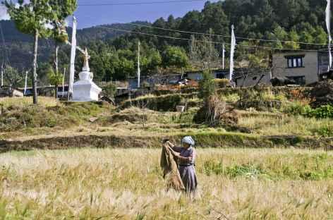 Sur le chemin de Tarkeghyang dans la vallée d'Helambu - Népal -