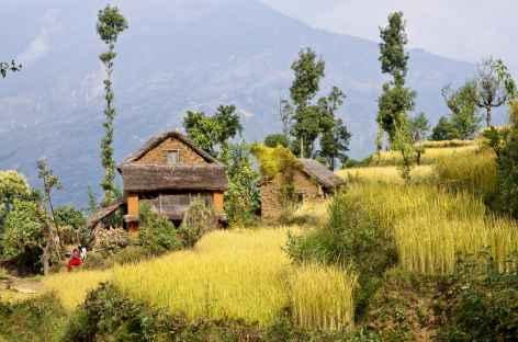 Villages et cultures dans la vallée d'Helambu - Népal -