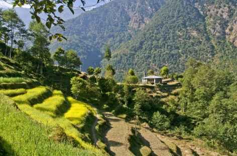 Chemin dans les terrasses cultivées - Helambu - Népal -