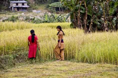 Scène rurale dans la région d'Helambu - Népal -