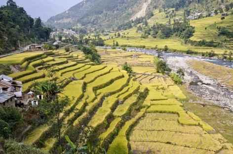 Cultures sur la route d'Helambu - Népal -