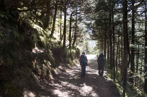 Traversée de forêt avant Tengboche- Népal -