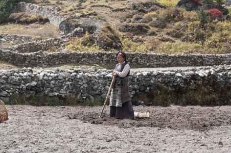 Travail dans les champs - Népal -