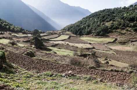 Terrases vers Namche Bazar - Népal -