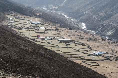 Paturages de Lengden - Népal -