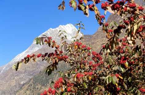 Sorbier et ciel bleu - Népal -