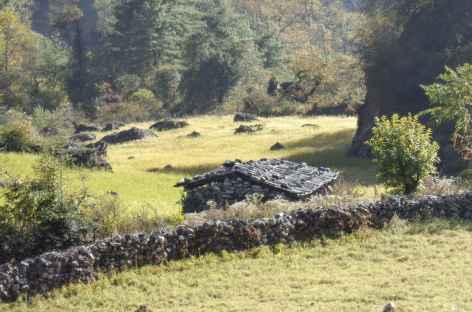 Retour dans les champs avant Tilje - Népal -