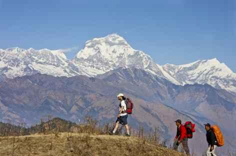 Le Dhaulagiri depuis Poon Hill- Népal -
