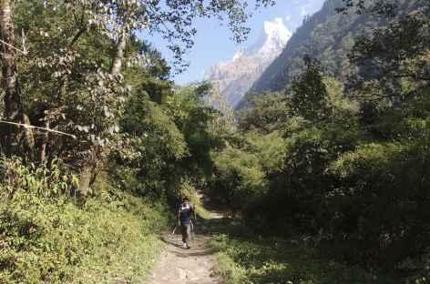 En route vers Bamboo - Népal -