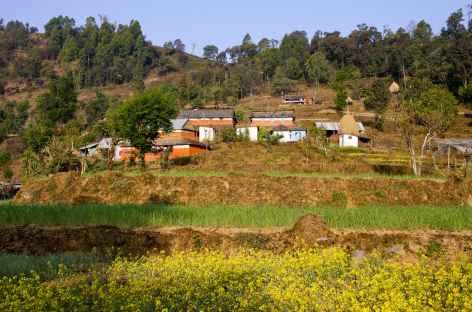 Couleurs des champs au printemps - Népal -