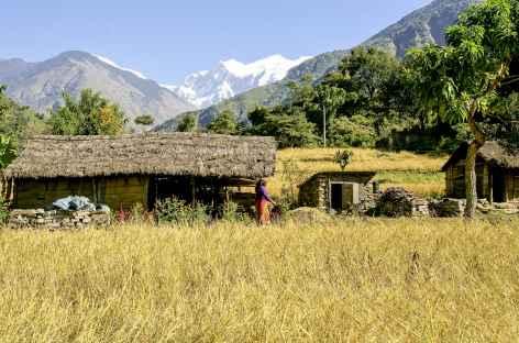 Champs et village des basses vallées - Népal -