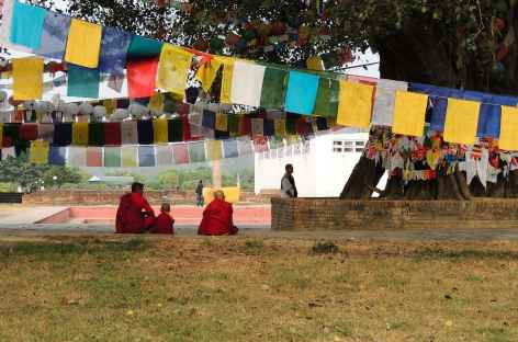 Jardins de Mayadevi, Lumbini - Népal -