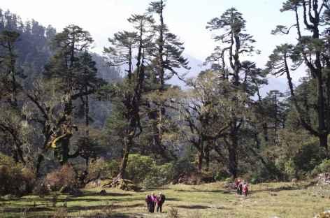 En direction de Tseram - Népal -