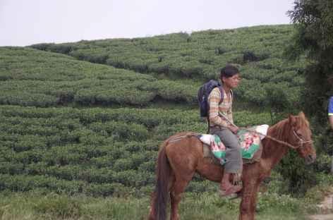 Jeune cavalier en Ilam - Népal -