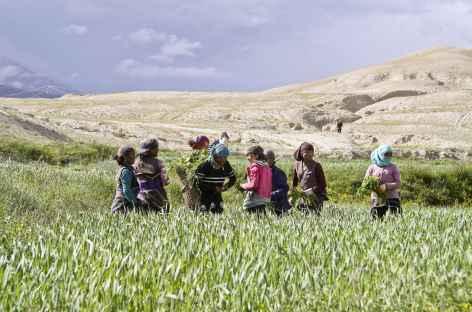 Travaux des champs au printemps, Mustang - Népal -