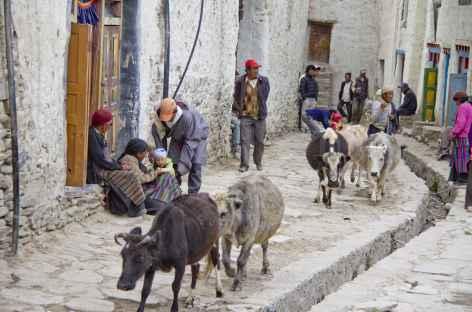 Scène de rue à Lo, Mustang - Népal -