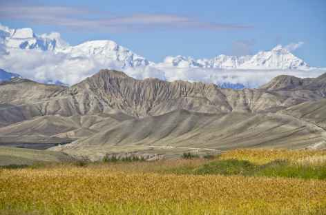 Les Annapurna depuis les champs de Ghami, Mustang - Népal -