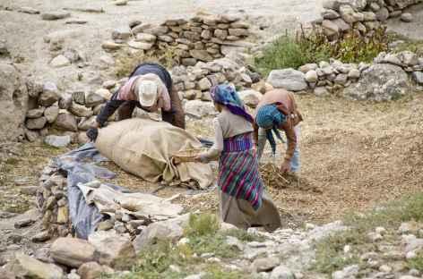Récoltes, Mustang - Népal -