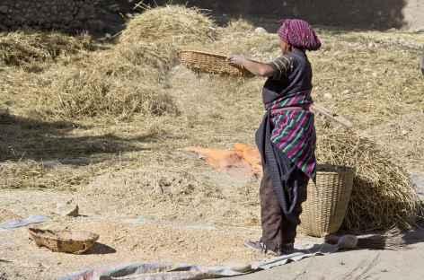 Travaux de récoltes, Mustang - Népal -