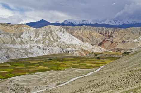 Cultures d'orge et de millet au Mustang (Népal) -