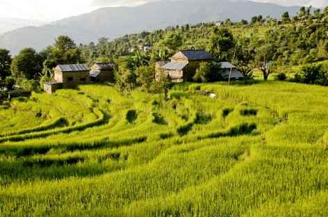 Les premières Rizières - Népal -